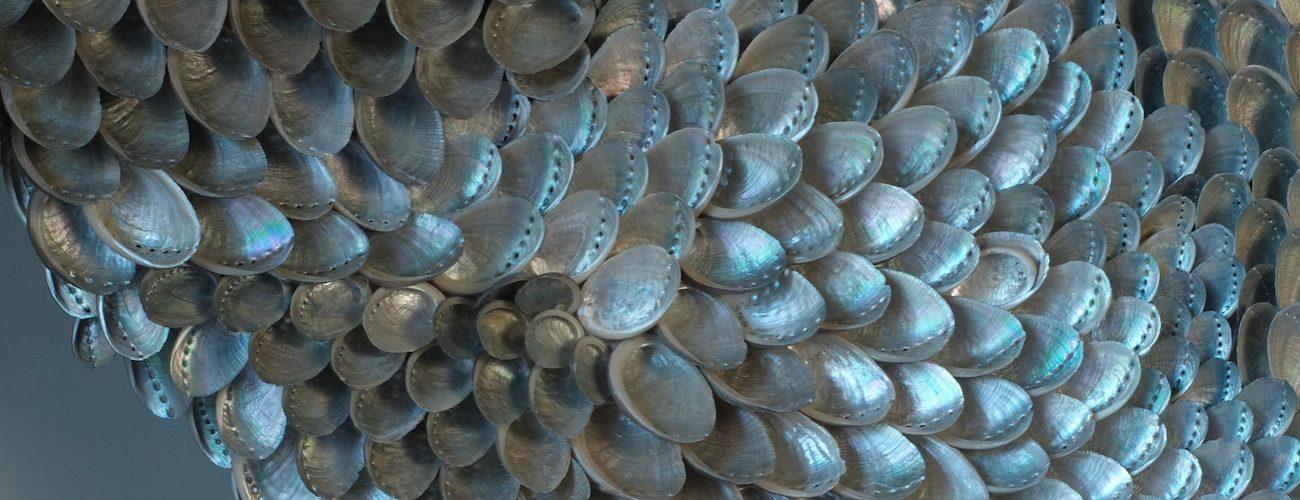 Blott Kerr-Wilson, asses ears shells, 2018